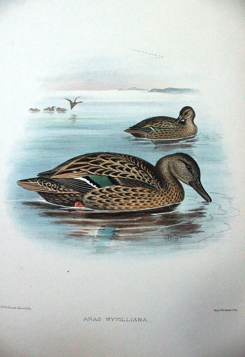 Category:Fauna Hawaiiensis